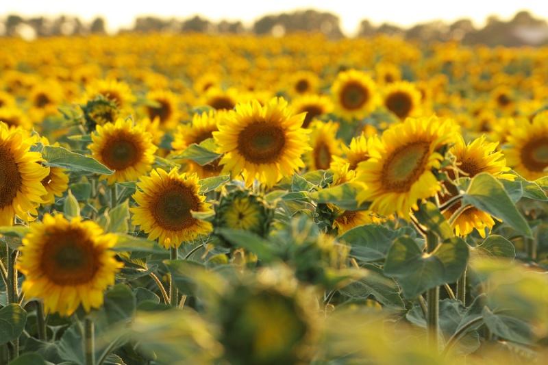 Sommer Sonne Sonnenschein 210