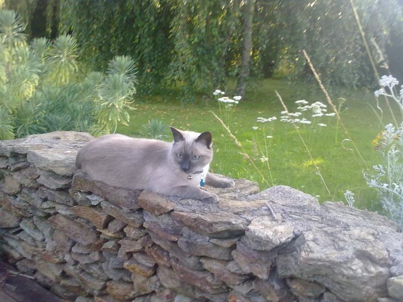 Photos des chats sauvés, avant/après 15072012