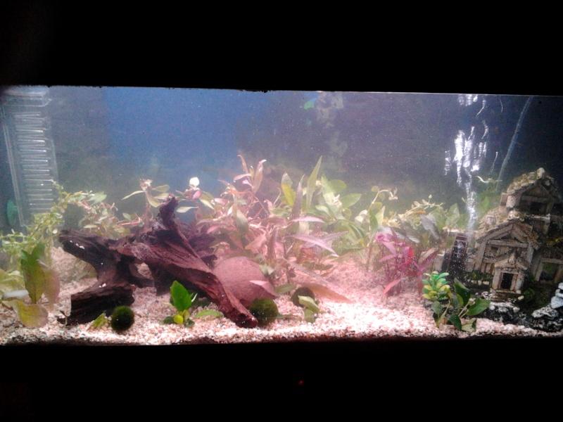 Mon aquarium  2012-015