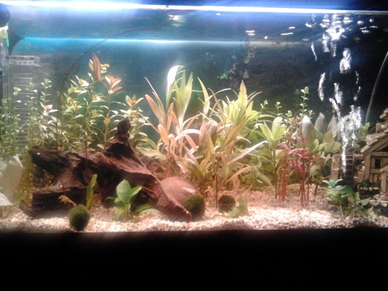 Mon aquarium  2012-016