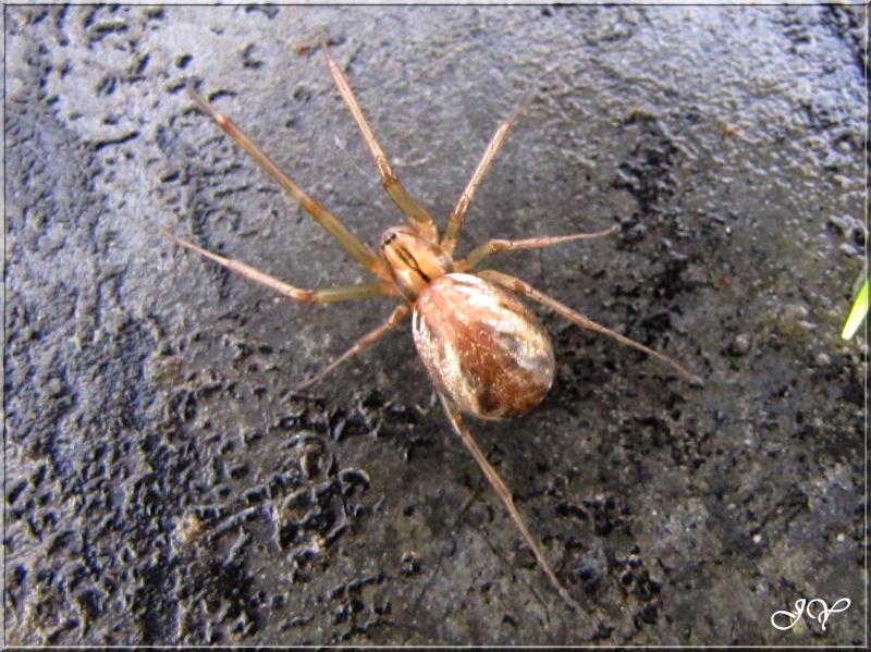 Araignée. Img_7810
