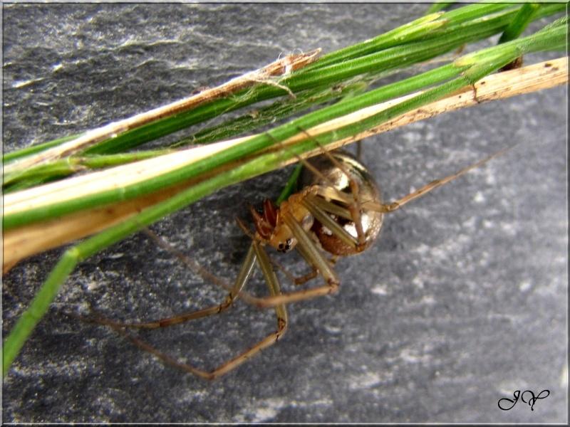 Araignée. Img_7811
