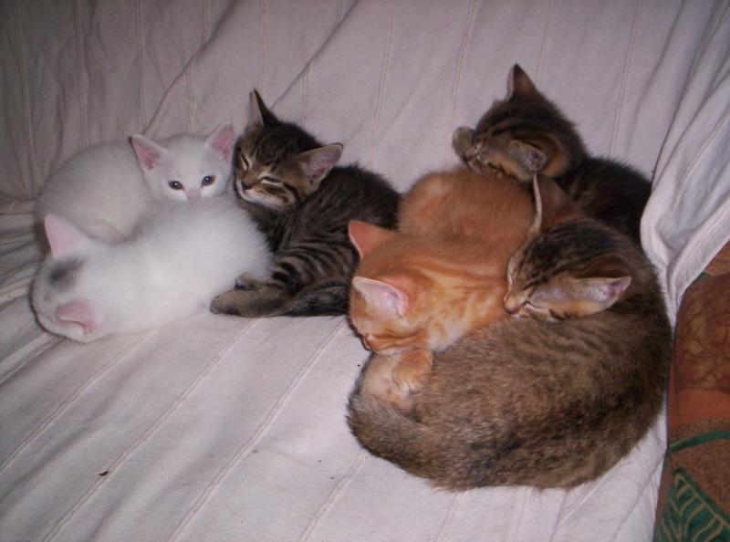 Je donne 3 chatons sur la région de Poitiers 000_0912