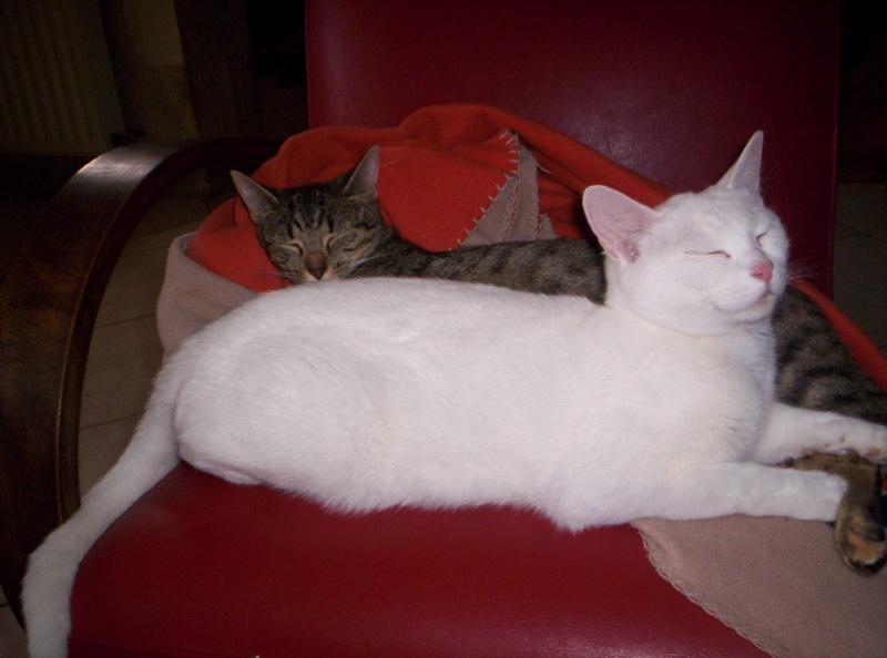 Je donne 3 chatons sur la région de Poitiers 000_0913