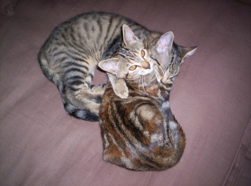 Je donne 3 chatons sur la région de Poitiers 01910