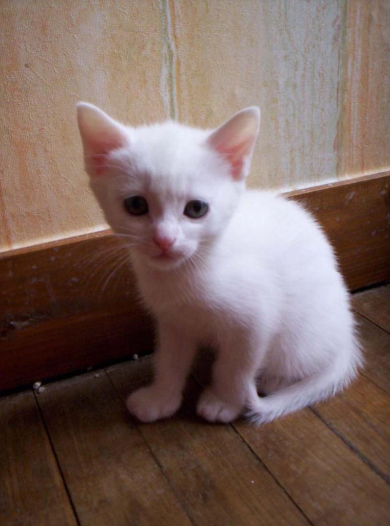 Je donne 3 chatons sur la région de Poitiers Mini_s11