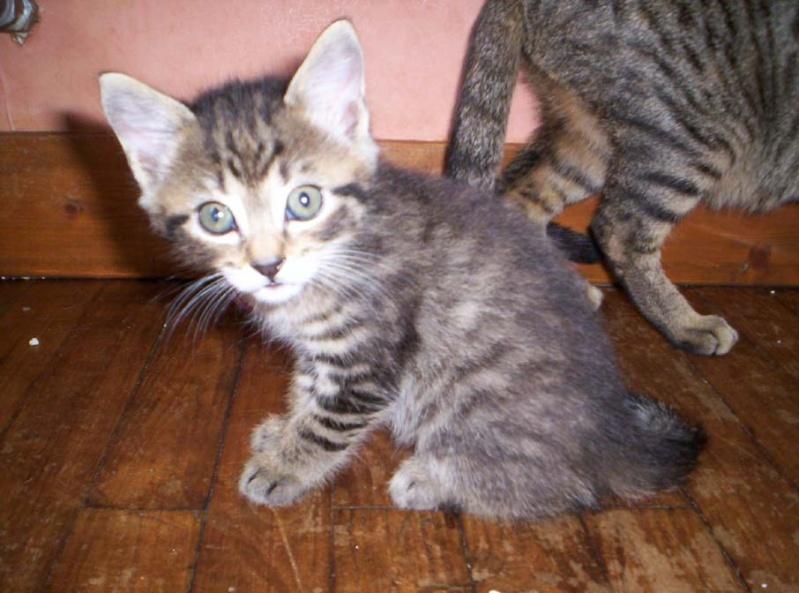 Je donne 3 chatons sur la région de Poitiers Mini_t11