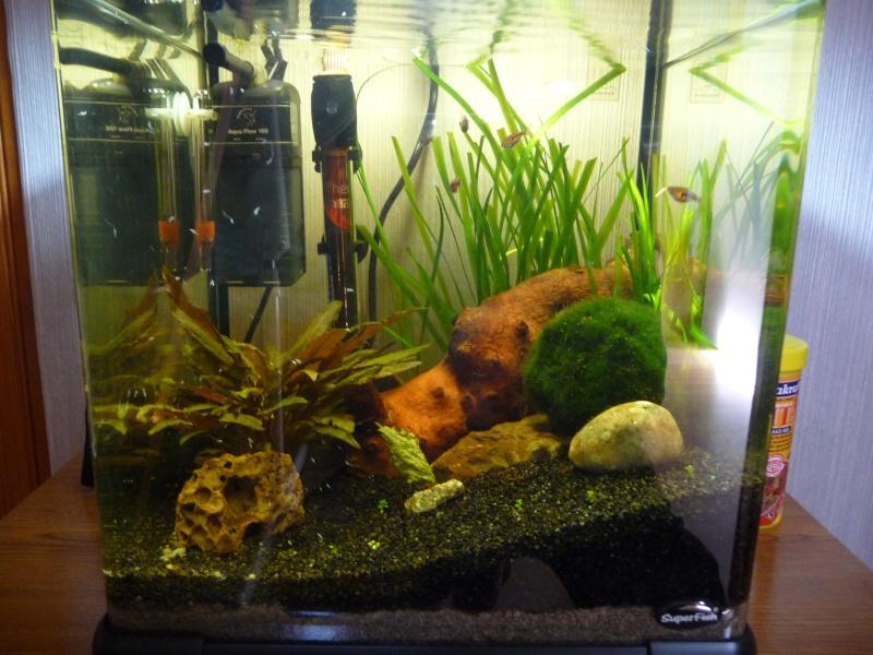 Mon aquarium (Maxou62) P1010511
