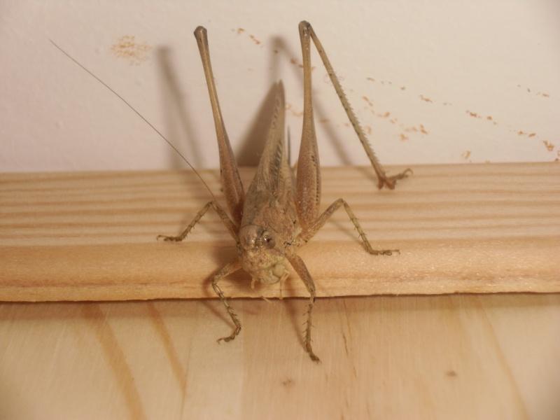 créer un forum : entomofolia - Portail Cimg1026