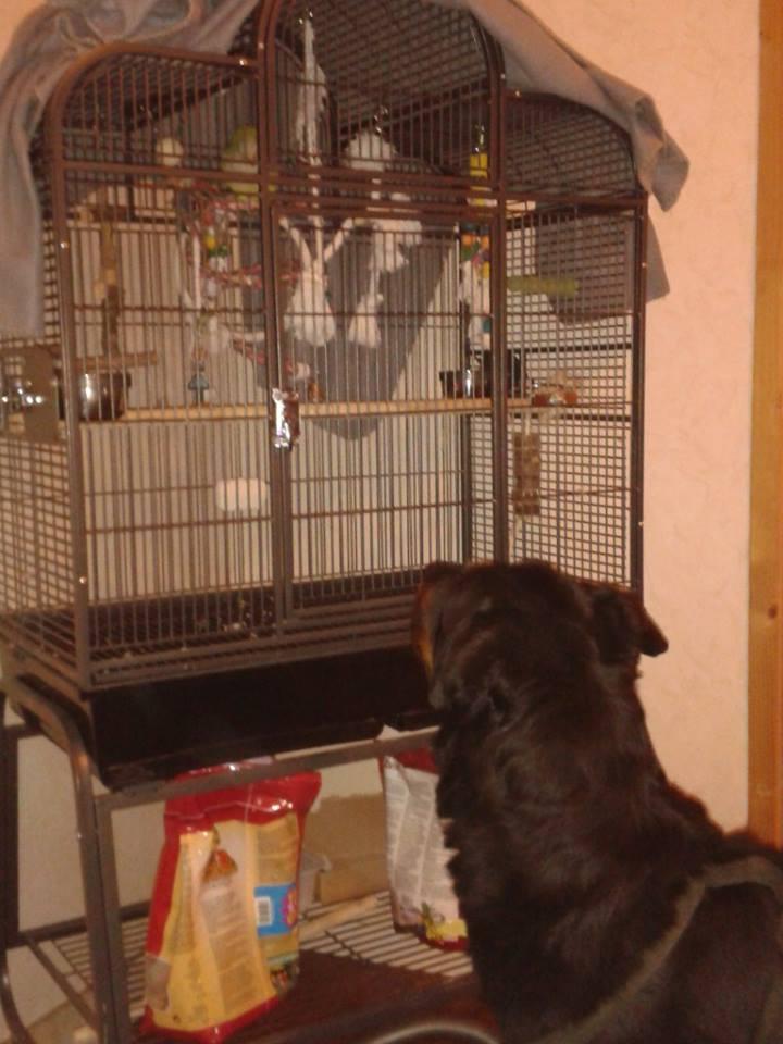 l'arrivé d'Esparo dans sa nouvelle maison 10034110