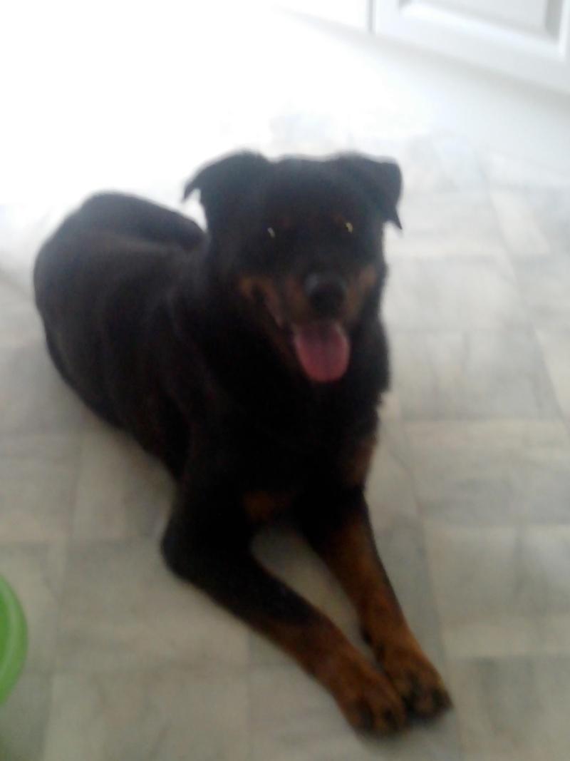 l'arrivé d'Esparo dans sa nouvelle maison Img_2011