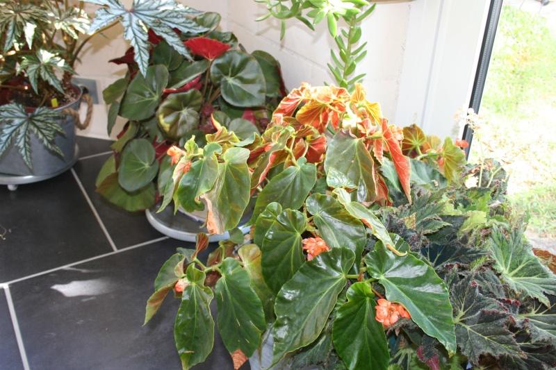 bego orange rubra Img_6924