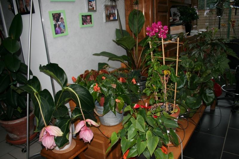arrosage automatique special vacances pour plantes d'interieur - Page 2 Img_7013
