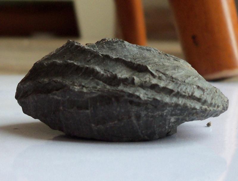 unusual brachiopod/bivalve found at Runswick Bay 21.10.12 can anyone identify? Side_v16