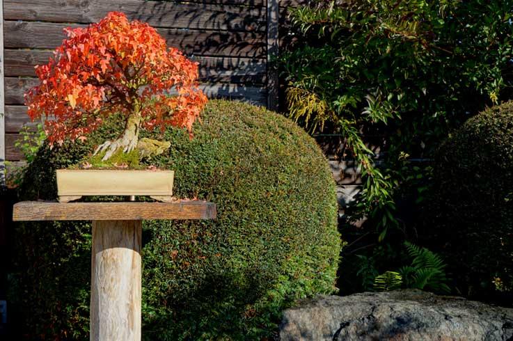 Trident in autumn Dreisp15