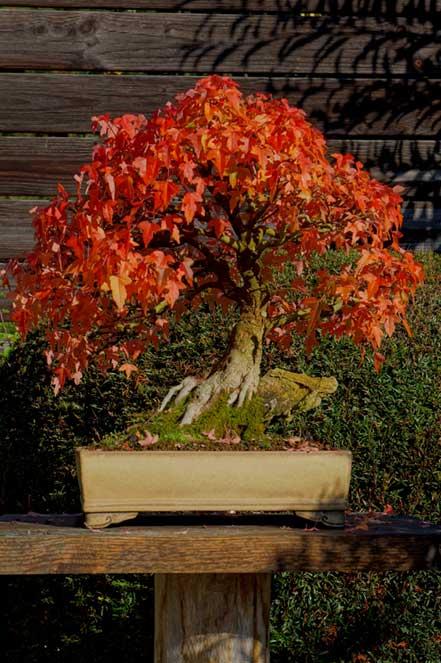 Trident in autumn Dreisp16