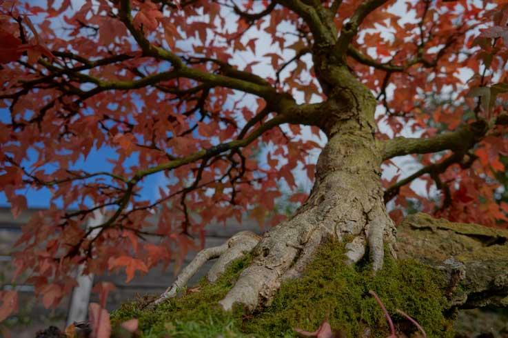 Trident in autumn Dreisp17