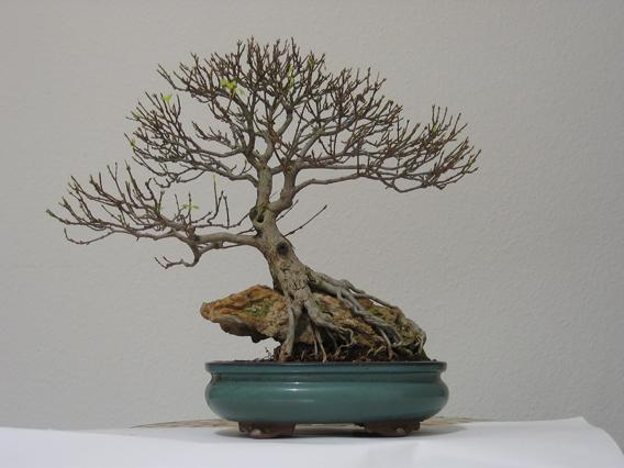 Trident in autumn Triden10