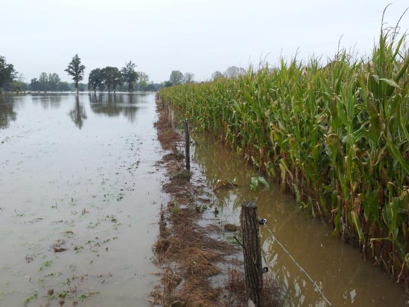 il pleut 2012 - Page 2 Photos14