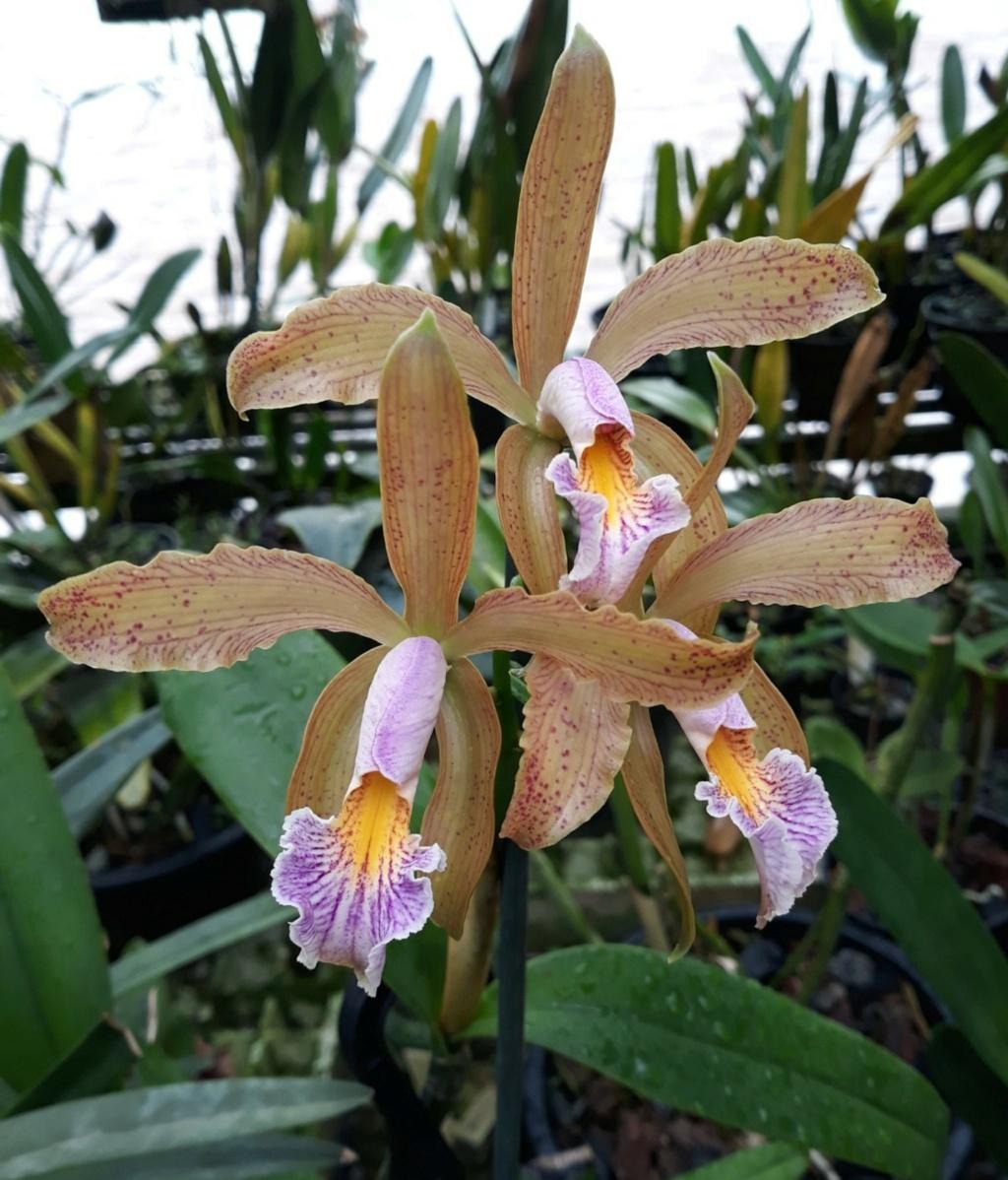 Photos d'orchidées inédites   - Page 10 13258510