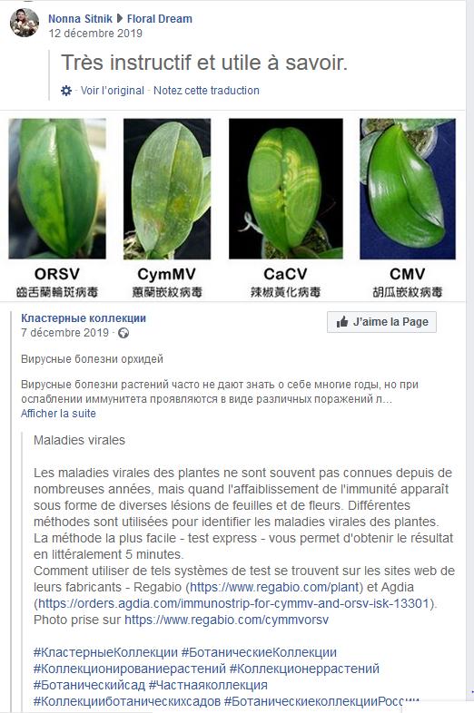Décolorations sur feuilles de Phalaenopsis  Captur33
