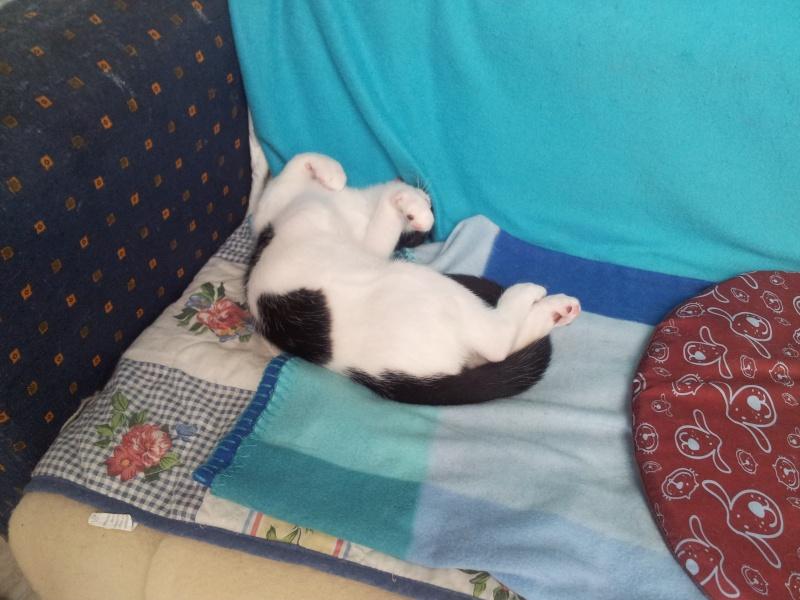 La face cachée de l'Ecole du chat de Quiberon - Page 4 20130758