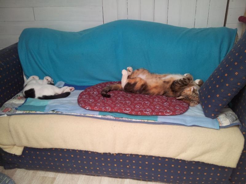 La face cachée de l'Ecole du chat de Quiberon - Page 4 20130759