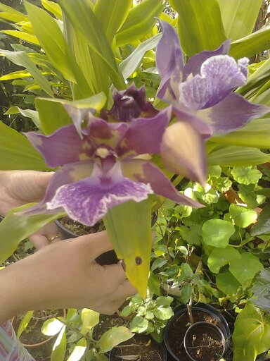 Quelques photos de mon jardin 13739110