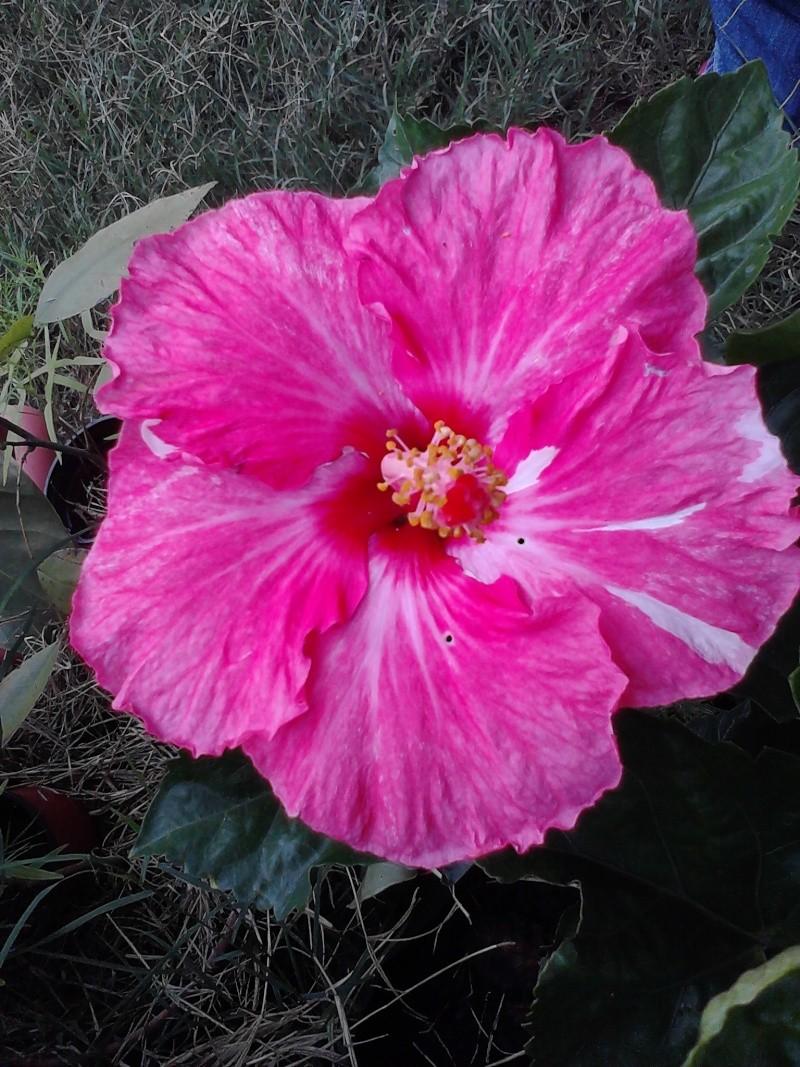 Quelques photos de mon jardin Img_2033