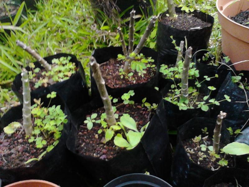 Quelques photos de mon jardin Img_2052