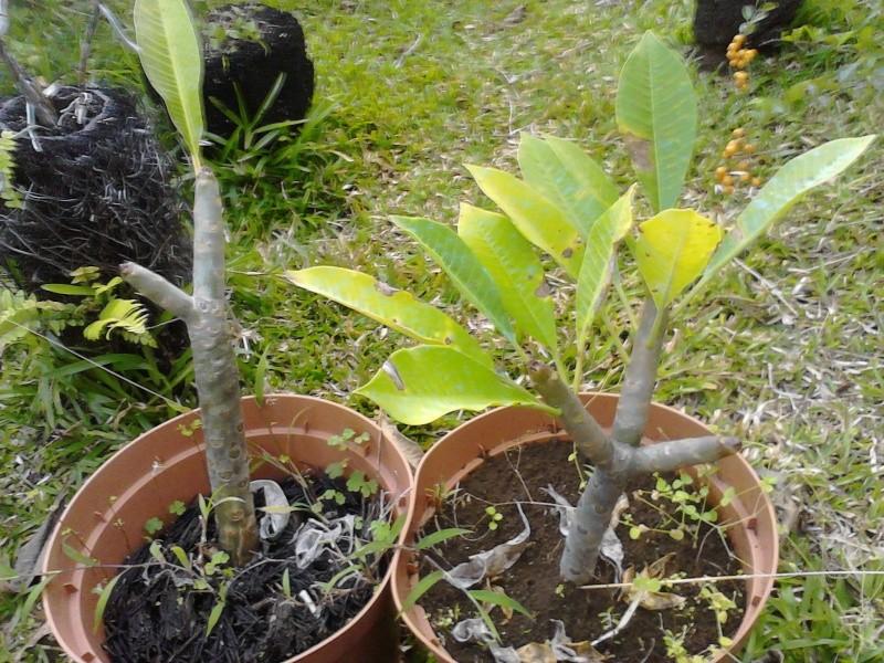 Quelques photos de mon jardin Img_2053