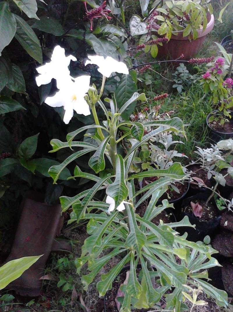Quelques photos de mon jardin Img_2054