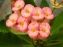 Quelques photos de mon jardin 022_210