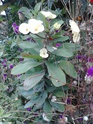 Quelques photos de mon jardin Img_2011