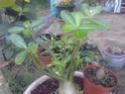 Quelques photos de mon jardin Img_2012