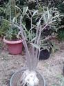 Quelques photos de mon jardin Img_2013