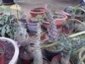Quelques photos de mon jardin Img_2020