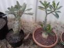Quelques photos de mon jardin Img_2021