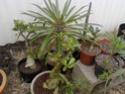 Quelques photos de mon jardin Img_2023