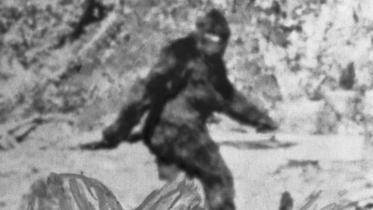 Bigfoot ... err ... ARTIE sighting. People10