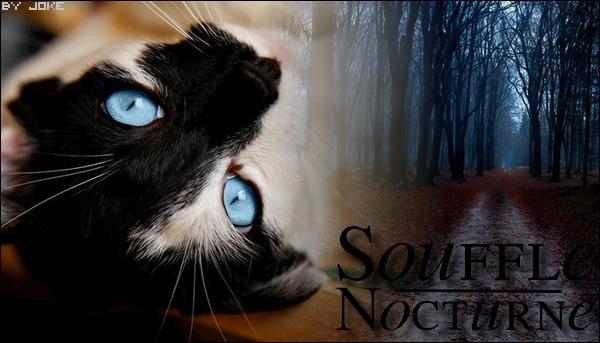 Souffle Nocturne • 32 lunes • Guerrier • Clan du Tonnerre Souffl11