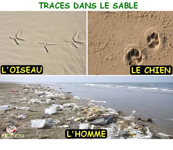 Protégeons nos plages et nos dunes 99394910