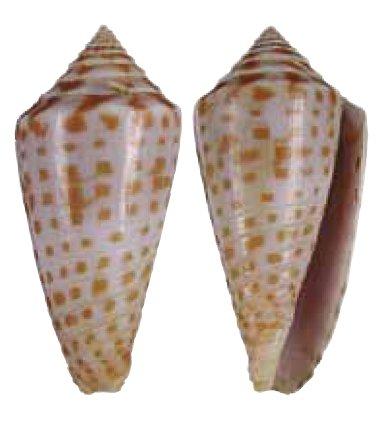 Cones a identifier, merci Image110