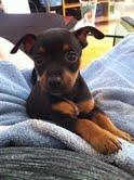 """le """"petit-petit"""" chien de ma cadette !!! - Page 2 Mail_g10"""
