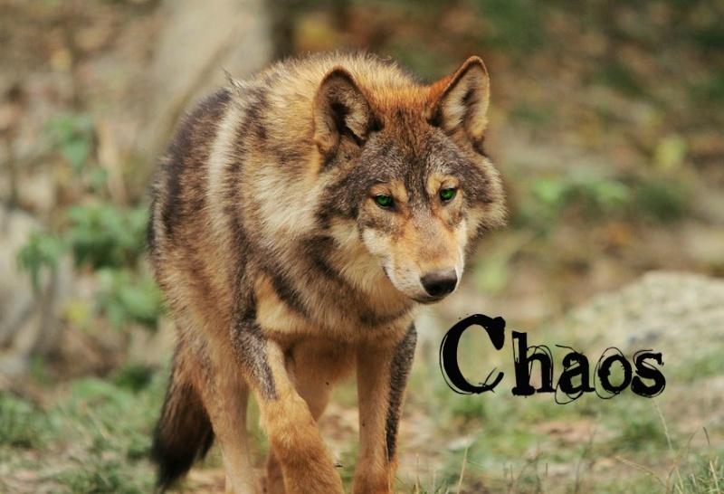-Chaos The Arcane- Handso10