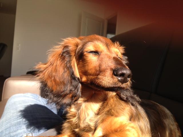 """Photos de vos chiens """"malheureux"""" Photo10"""