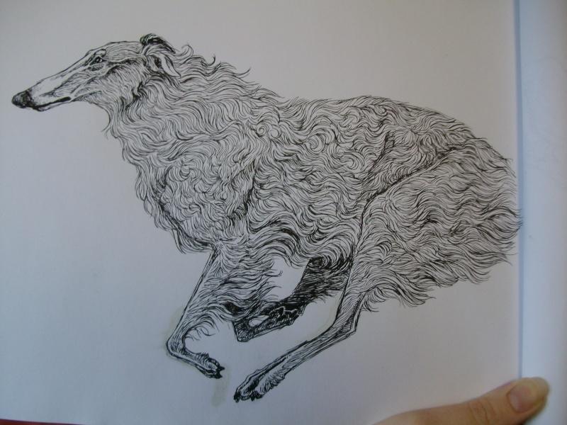 Dessins de chiens - Page 2 Borzoi10