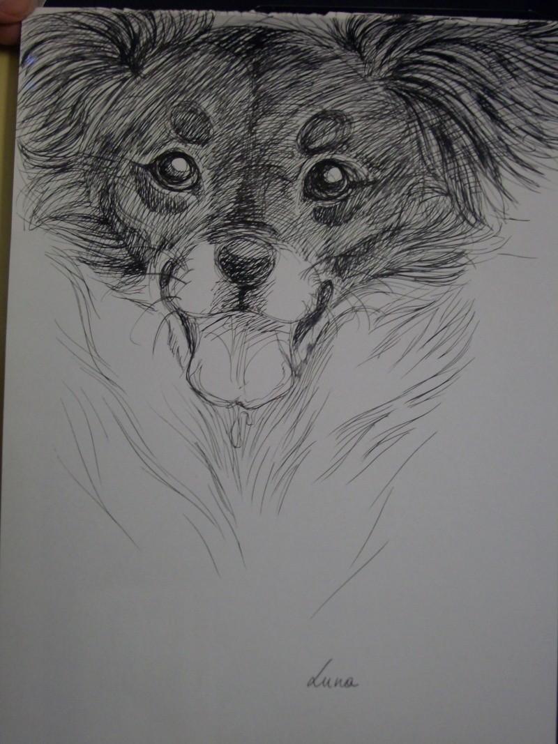 Dessins de chiens - Page 2 Portra10