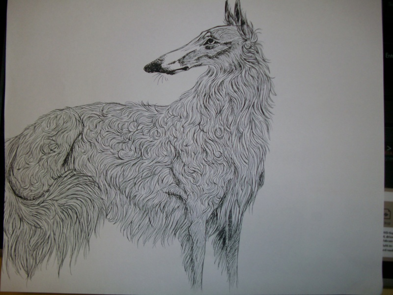 Dessins de chiens - Page 2 Zima210