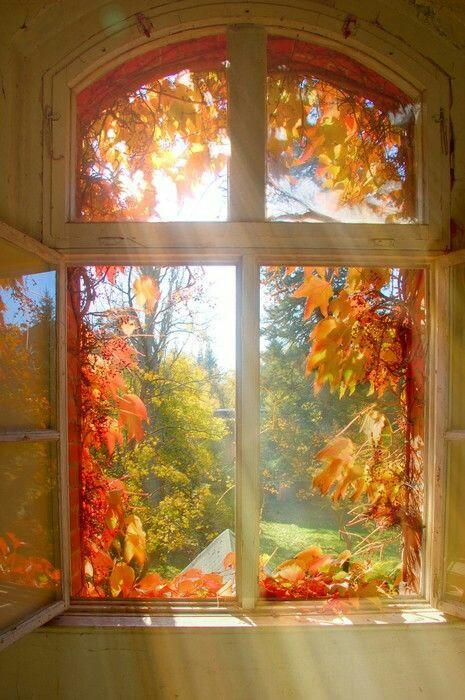 ... è , sarà autunno ...  9215cc10